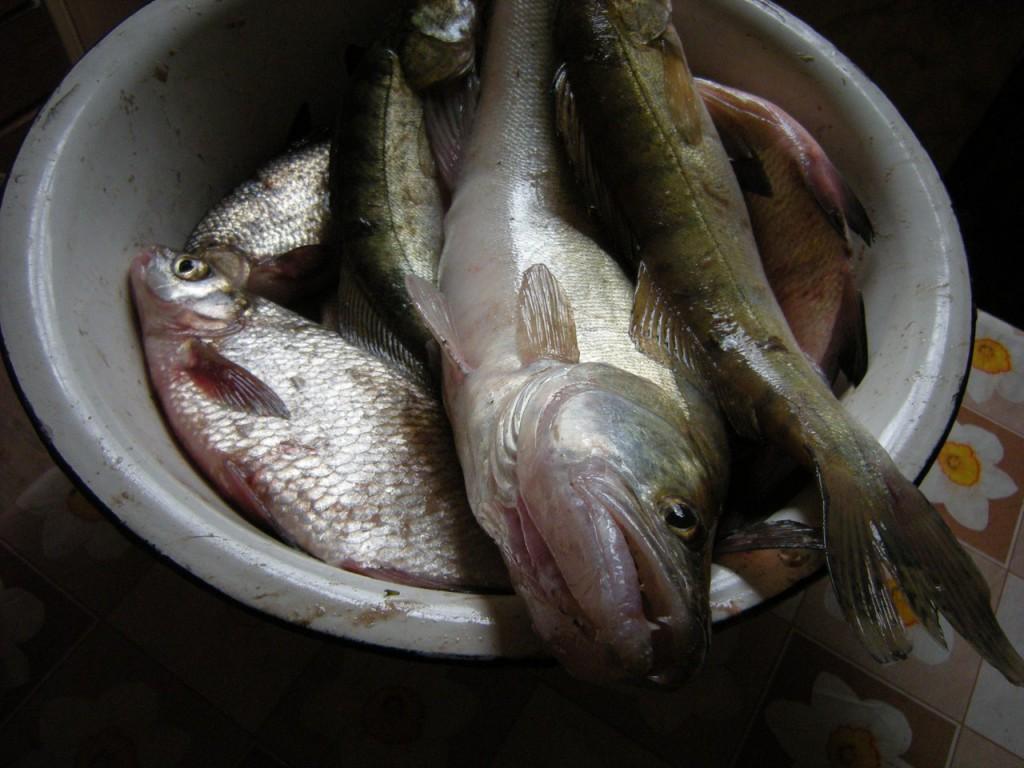 плес рыбалка видео